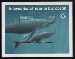 Dominica MNH Scott #2087 Souvenir Sheet $5 Humpback Whale - International Year Of The Ocean - Dominique (1978-...)