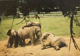Postcard - Elephants At Woburn Wild Animal Kingdom. CKWOB142 - Elephants