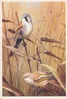 BIRD POSTCARD. MORNING GLORY BY D.M. REID -HENRY - Birds