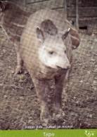 Adoption Card - Tapirs At Dublin Zoo. A - Animals