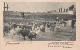G.BERTACCHI   Al Pascolo - Cartoline