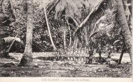 République De KIRIBATI - Iles GILBERT - L´intérieur De La Forêt Tropicale - Kiribati