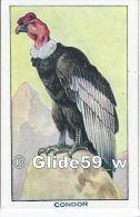 Chromo - Les Oiseaux - Condor - Bon Point - Anémie - Sirop Deschiens - N° 29 - Andere