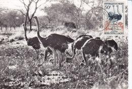 Animaux, Carte Maximum  Niger Yvert 105, Autruches