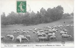 SUCY EN BRIE - Pâturage De La Fontaine De Villiers - Sucy En Brie