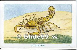 Chromo - Les Arthropodes - Scorpion - Bon Point - Anémie - Sirop Deschiens - N° 4 - Andere