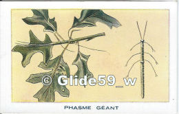 Chromo - Les Arthropodes - Phasme Géant (Bâton Du Diable) - Bon Point - Anémie - Sirop Deschiens - N° 6 - Andere