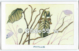 Chromo - Les Arthropodes - Phyllie - Bon Point - Anémie - Sirop Deschiens - N° 7 - Andere