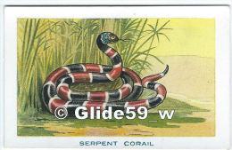 Chromo - Les Réptiles - Serpent Corail - Bon Point - Anémie - Sirop Deschiens - N° 17 - Andere
