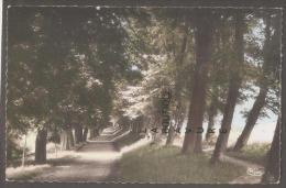 62---HESDIN--La Tour Des Chaussées--cpsm Pf Colorisée - Hesdin