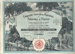 PLANTATIONS DE L'OGOOUE - Afrique