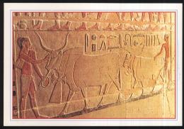 Egypt-sakkara-the Tomp Of Mer Roka-plughing-unused,perfect Shape - Egypt