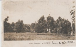 ZANZIBAR-  Clove Plantation          Foret De Girofliers. - Tanzanie