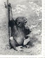 DIERENTUIN ANTWERPEN - Jardin Zoologique Anvers - Fotoreeks Dieren - Animales