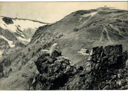 68  VALLEE DE MUNSTER  -  LE HOHNECK  -  CPM 1950/60 - Munster