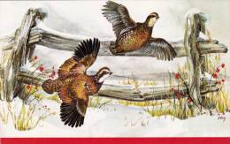 OD/ Patrijzen, Patrijs, Perdrix Gris, Partridges Publ. Red Farm Studio Pawtucket RI - Vögel