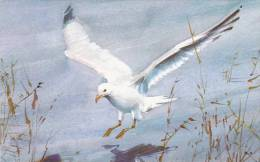 OD/ Seagull, Laridae Larides (zee)meeuw Publ. Red Farm Studio Pawtucket RI - Vögel