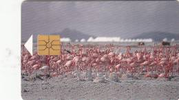 BONAIRE - Pink Flamingo, First Chip Issue, Chip GEM1a, Tirage %5000, Used - Antilles (Netherlands)