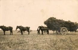 CPA - T1 - ANIMAUX, AGRICULTURE, FERME, PAYSANT - CHEVAUX - Attelage, La Rentrée Des Foins - 44 - Pferde