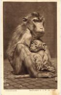 SINGE ... MONKEY ... - Monkeys
