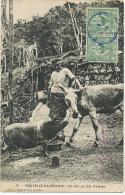 17 Un Trio Au Col D' Amieu LBF Cochon Ane Canaque  Voyagé - Nouvelle-Calédonie
