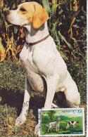 Animaux, Chien Pointer Et Setter, Carte Maximum Monaco  1979, Dos Pub Antar, Traces De Colle - Hunde
