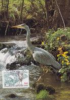 Animaux, Heron Peche, Carte Maximum  France , Yvert 2146, Rochefort 1981