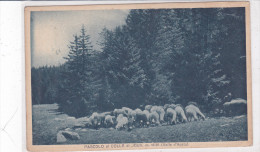 CARD PECORE AL PASCOLO  AL COLLE DI JOUX  VALLE D'AOSTA- FP-VSB-2 -0882-22291 - Animals