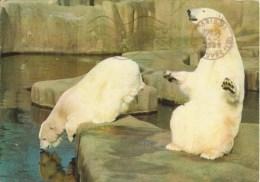 Muséum National D'histoire Naturelle - Parc Zoologique Paris - L'ours Blanc - Bears