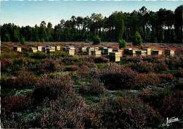 -gd Format -ref M72- Insectes -apiculture - Abeilles-en Sologne -les Ruches Dans Les Bruyeres  Carte Bon Etat - - Insectes
