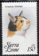 Sierra Leone MNH Scott #1644c 150le American Wirehair  - Cats Of The World - Sierra Leone (1961-...)