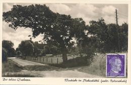 CUXHAVEN - 1942 , Windeiche In Stickenbüttel - Ohne Zuordnung