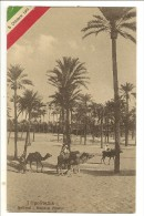 S1500 - Tripolitania - Nell'Oasi - Bosco Di Palmizi - Libye