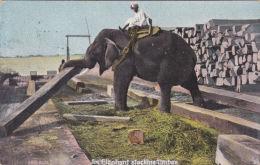 ELEPHANT STACKING TIMBER - Elephants