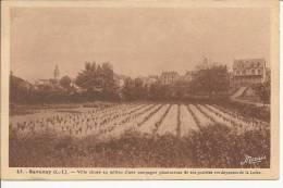 44  SAVENAY         VILLE  SITUEE  AU  MILIEU CAMPAGNE PLANTUREUSE PRAIRIES VERDOYANTES - Savenay