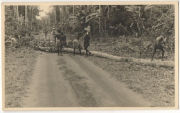 Carte Photo. Congo. Bucherons Africains & Chemin De Brousse. - Afrika