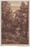 POSTCARD 1950 CA.LOCH LOMOND FROM WOODS NEAR LUSS - Scotland