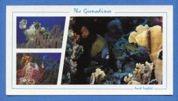 Iles Grenadines - French Angelfish - Grand Format - Saint-Vincent-et-les Grenadines