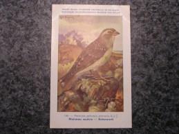 MOINEAU SOULCIE Musée Royal D´ Histoire Naturelle De Belgique Oiseau Bird Oiseaux Illustration DUPOND H Carte Postale - Oiseaux