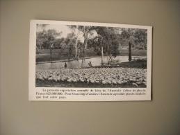 AUSTRALIE AUSTRALIA LA PRESENTE EXPORTATION ANNUELLE DE LAINE.............. - Australie