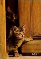 N°20 -YY-136   PETIT CHAT TIGRE  REVE DE CHAT  REGARDANT A LA PORTE FEELING - Chats