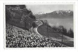 10769 - Chemin De Fer Des Pleïades Sur Vevey Champ De Narcices - VD Vaud