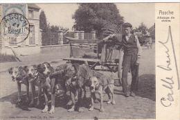 Assche   Attelage de Chiens circul� en 1903