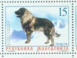MK 1999-150 DOG, MAKEDONIA, 1v, MNH - Macedonië