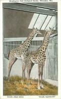 Cpa MILWAUKEE - Washington Park Zoological Garden - Giraffe - East Africa - Giraffa Tipplekirchii - Milwaukee
