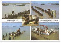 MYTICULTURE ,MOULE DE BOUCHOTS ,MULTI VUES  ,COULEUR   REF 41093 - Visvangst