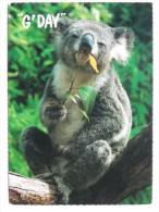 Koala  /Australia Postcard - Animali