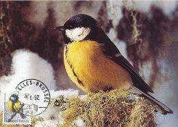 D18754 CARTE MAXIMUM CARD 1992 BELGIUM - BUZIN - PARUS MAJOR MÉSANGE CP ORIGINAL - Sperlingsvögel & Singvögel