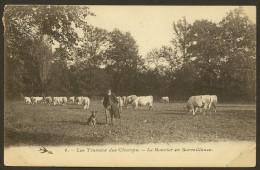 Les Travaux Des Champs Le Chien Bouvier En Surveillance Des Vaches (Hirondelle) Nièvre (58) - France