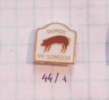 DUROK AMERICAN Race PIG FARNING Sombor Serbia / SANGLIER COCHON Boar Pigs Cinghiale Everzwijnen, L´agriculture, La Ferm - Animals